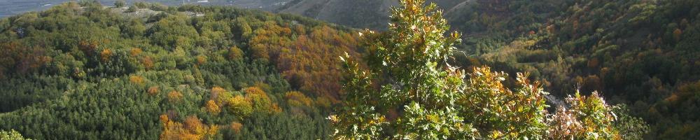 pianificazione forestale