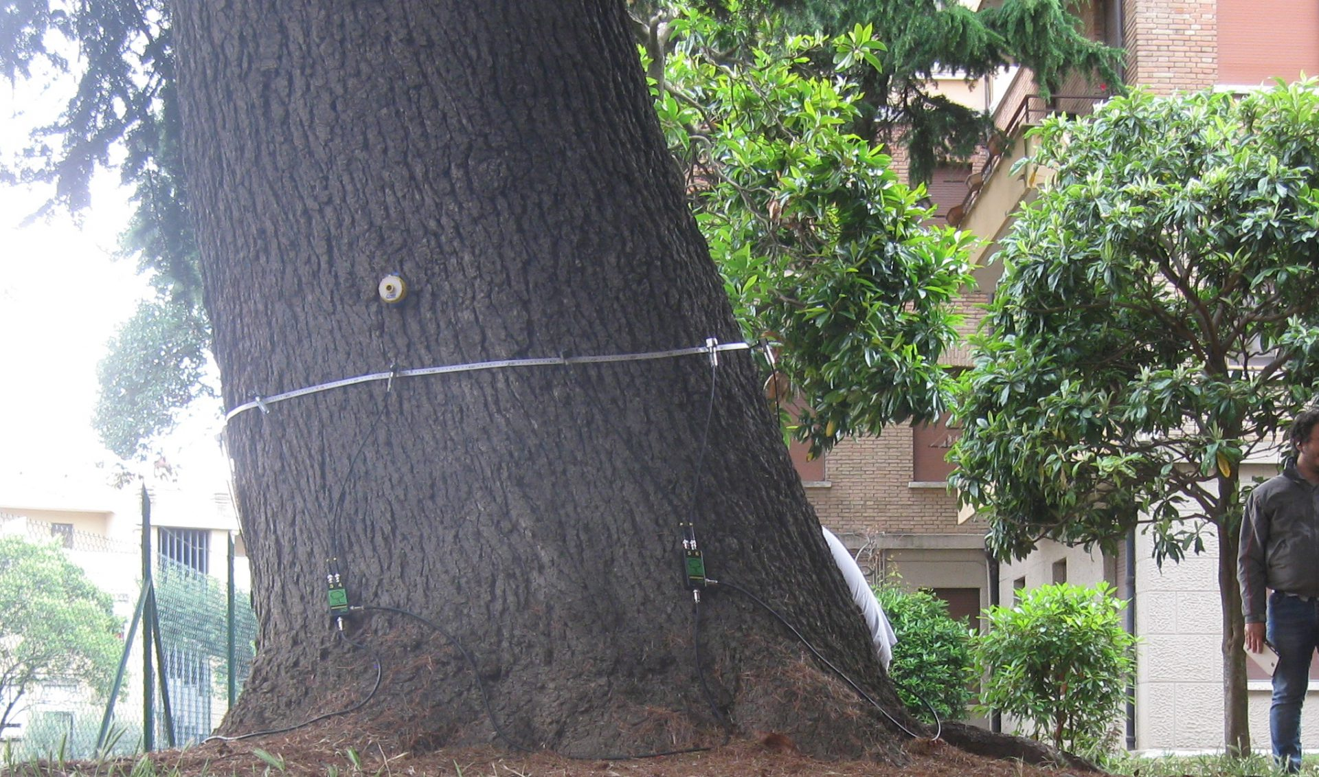 alberi in città